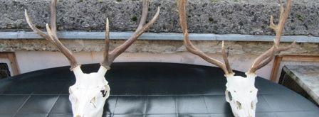 Beseda o poľovníctve a prírode - 6